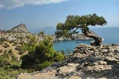 Solig dag i Krim Fotografering för Bildbyråer