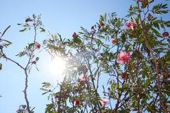 Solig dag med en blå himmel och ett träd arkivbilder