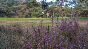 Solig dag på en golfcourse Royaltyfri Fotografi
