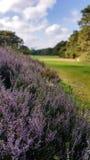 Solig dag på en golfcourse Royaltyfri Foto