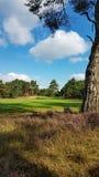 Solig dag på en golfcourse Royaltyfria Bilder
