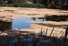 Solig dag på en lugna bevuxen flod i sommar Royaltyfri Bild