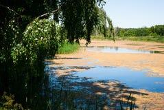 Solig dag på en lugna bevuxen flod i sommar Royaltyfria Bilder