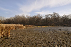 Solig dag på slätten för Dnieper flodflod royaltyfria foton