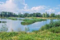 Solig dag, sjö och äng med blå himmel Treeas och moln royaltyfri fotografi