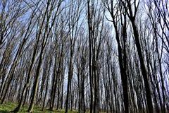 solig dagskogliggande Arkivfoton