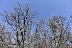 solig dagskogliggande Arkivbilder