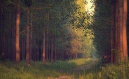 solig dagskogliggande Arkivfoto