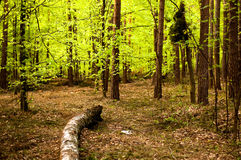 solig dagskogliggande Royaltyfri Bild