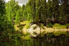 solig dagskogliggande fotografering för bildbyråer
