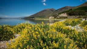 Solig dagWanaka lake, södra ö som är nyazeeländsk. royaltyfri bild