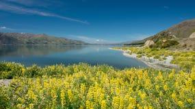 Solig dagWanaka lake, södra ö som är nyazeeländsk. fotografering för bildbyråer