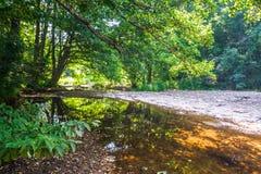 Solig grön skog med en flod Arkivbild