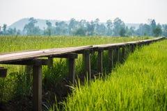 Solig gryning i ett fält i Thailand Royaltyfri Fotografi