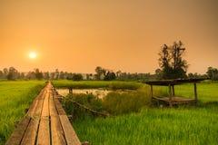 Solig gryning i ett fält i Thailand Royaltyfria Foton