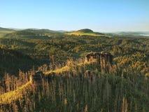 Solig höstmorgon ovanför dödskog på den steniga kullen Torra stammar klibbar upp Arkivbild
