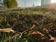Solig höstmorgon vattendroppar på sidor, kulör matta av stupade sidor Grönt gräs med orange sidor och stadssikt royaltyfria foton
