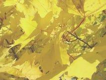 solig leaf Arkivbild
