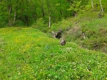 Solig skogäng med grönt gräs och vildblommor Royaltyfria Foton