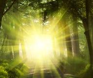 solig skog Arkivbild