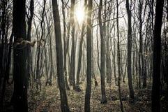 solig skog Royaltyfria Bilder
