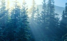 Solig skog Royaltyfri Bild