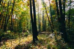 solig skog Fotografering för Bildbyråer