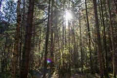 solig skog Arkivfoto