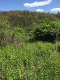 solig skog Royaltyfria Foton