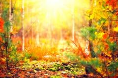 Solig skog för suddig höst royaltyfria bilder