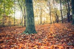Solig skog i hösten i Europa arkivfoto