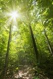 solig skogbana Arkivfoton