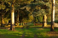 solig skogsmark för väg Arkivfoto