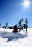 solig snowscape Royaltyfria Bilder