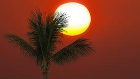 Solig solnedgång och palmträd stock video