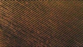 Solig sommar i druvadalen upplösning 4K Druvaterrass i solljuset arkivfilmer