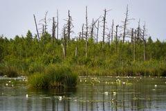 Solig sommardag i träsksjön arkivfoto