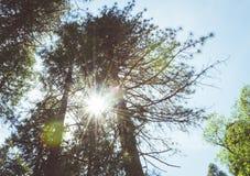Solig sommarskog av den Yosemite dalen Kalifornien 2007 januari nationalpark tagna USA yosemite Arkivbilder