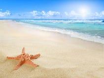 Solig strand med sjöstjärnan arkivfoto