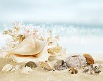 Solig strand med skal Arkivbild