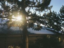 solig tree Arkivfoto