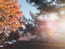 solig tree Arkivfoton