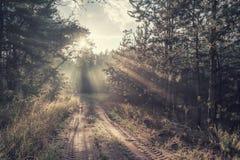 Solig väg i skog royaltyfri fotografi