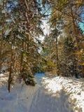 Solig väg i snöig skog för vinter arkivfoton