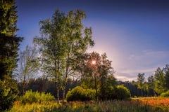 Solig varm afton i trä arkivfoton