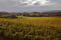 solig vingård Arkivfoton