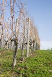 solig vingårdvinter för dag royaltyfri fotografi