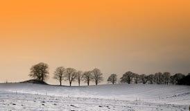 solig vinter Arkivbild