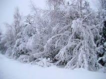 solig vinter för dagliggandepark Royaltyfri Bild