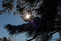 solig vinter för liggandeberg Arkivfoton